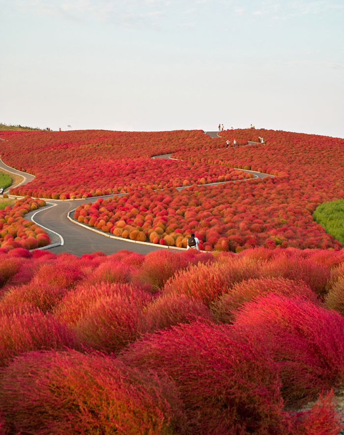 hitachi-seaside-park-japan