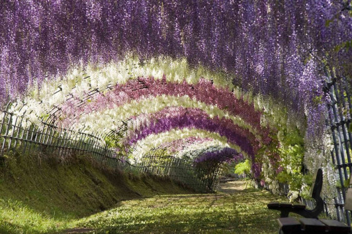 japan-flower-tunnel