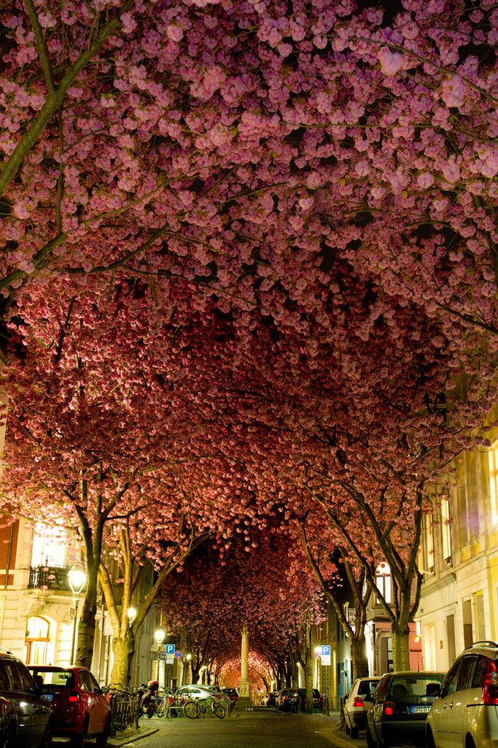 street-in-bonn-germany