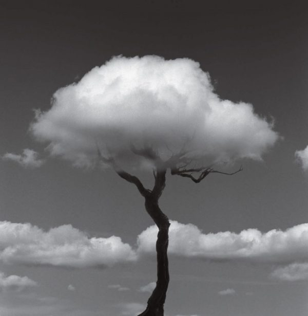 tree-clouds-chema-project