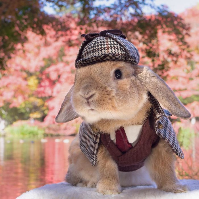 worlds-most-stylish-bunny-puipui-10
