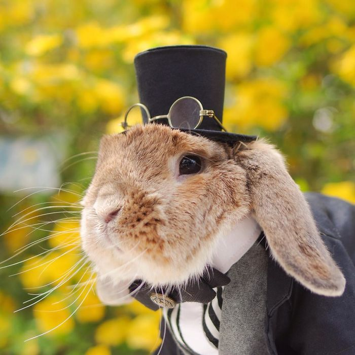 worlds-most-stylish-bunny-puipui-2