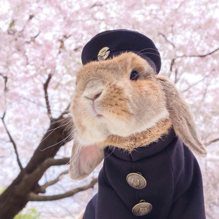 worlds-most-stylish-bunny-puipui-4