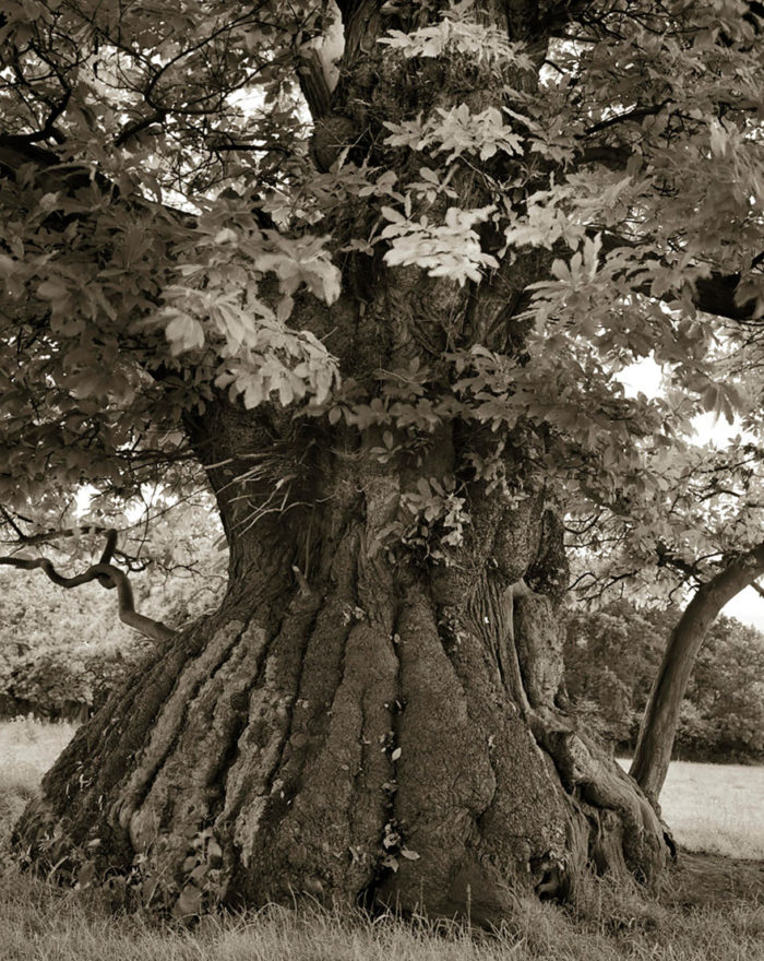 ancient-trees-beth-moon-12