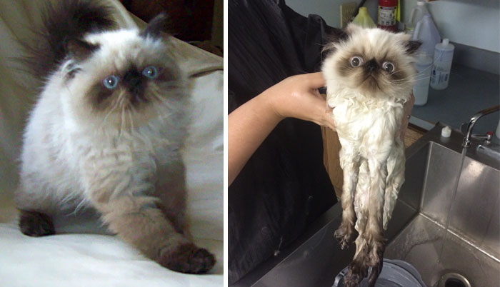 before-after-wet-cat