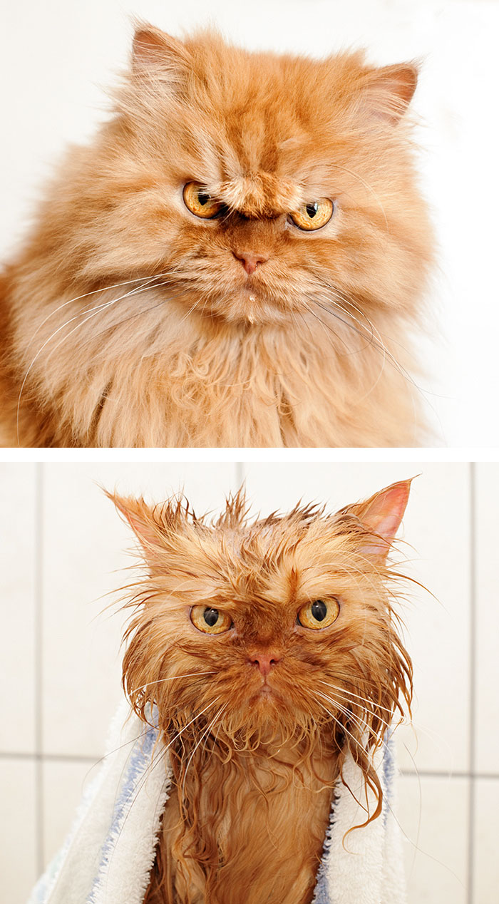 cat-wet-before-after