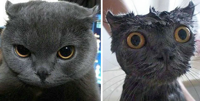 cute-cat-before-after