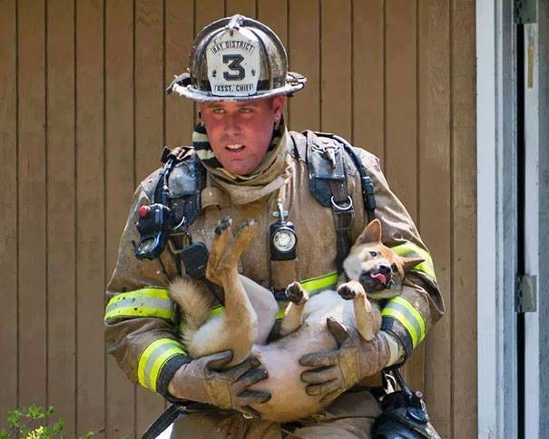 firefight-save-dog