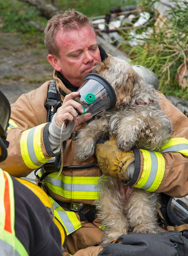 firefighter-saves-dog