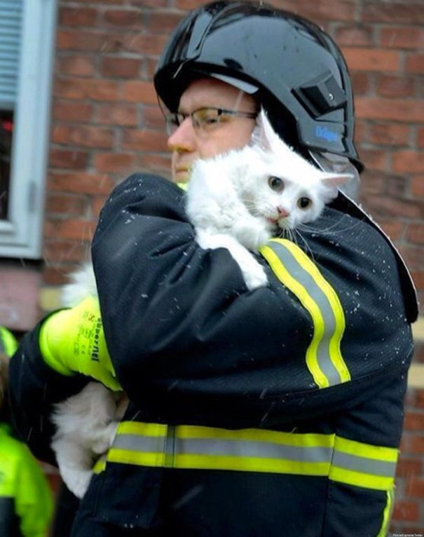 kitten-saved-firefighters