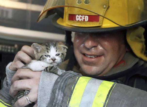 little-cat-saved