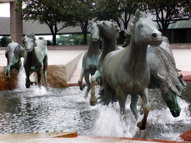 mustangs-of-colinas